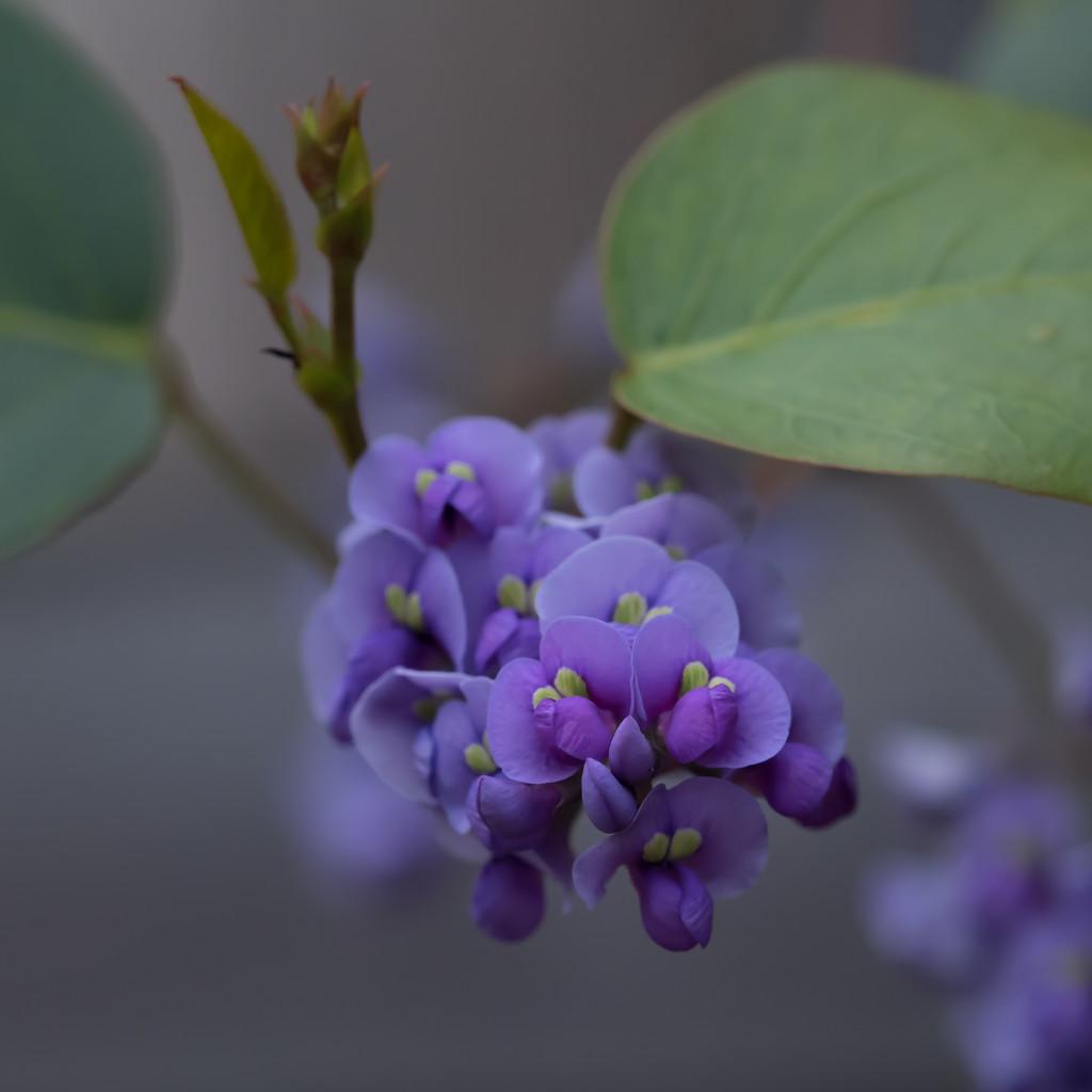 Purple beauty by gosia