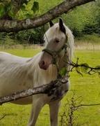 8th Sep 2020 - White horse