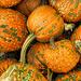 Pumpkin by joansmor