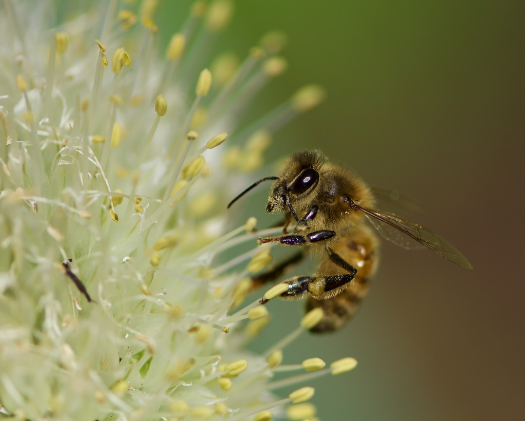 This Pollen's Getting Up My Nose DSC_1048 by merrelyn