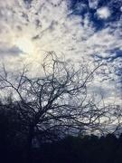 8th Sep 2020 - Scribble tree