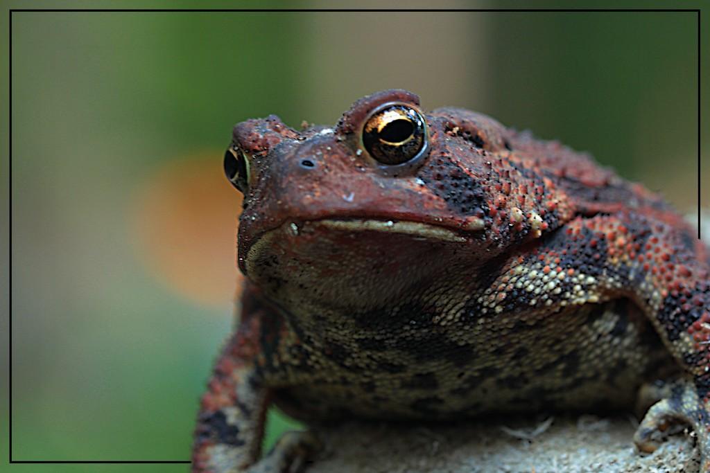 Mr. Grumpy Face by olivetreeann