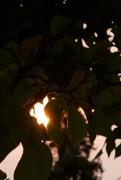 8th Sep 2020 - Glowing Sun