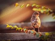 8th Sep 2020 - Little bird @ Sunset