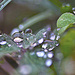 TINY WATER DROPS by sangwann