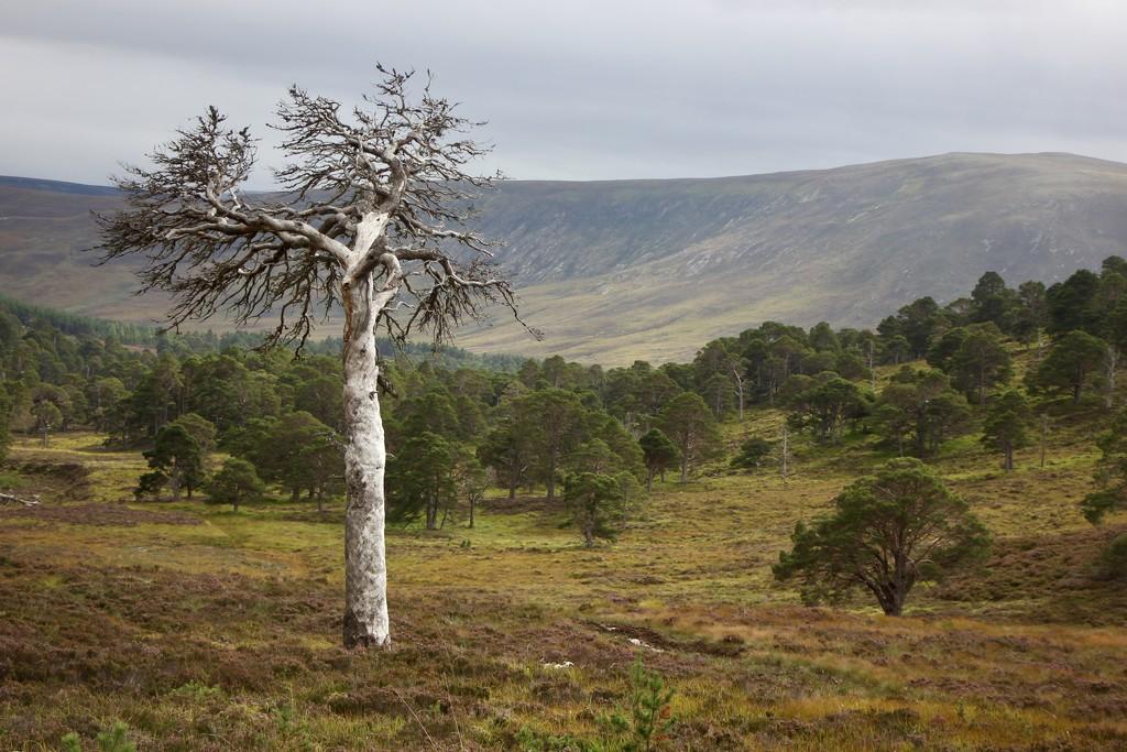 Lone Tree by jamibann