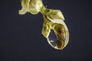 1st Sep 2020 - Bud in a Bubble