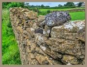 9th Sep 2020 - Dry-stone Wall