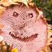 Smile, Just Smile by 30pics4jackiesdiamond