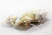 9th Sep 2020 - Shells