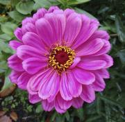 8th Sep 2020 - Pink Flower