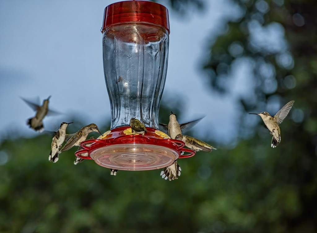 Feeding Frenzy-it's a hummer of a party  by samae