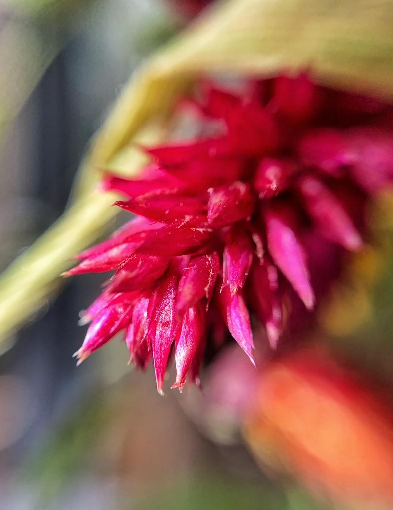 Pink.  by cocobella