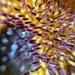 Sunflower macro.  by cocobella