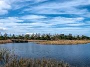 10th Sep 2020 - Kingfisher Creek