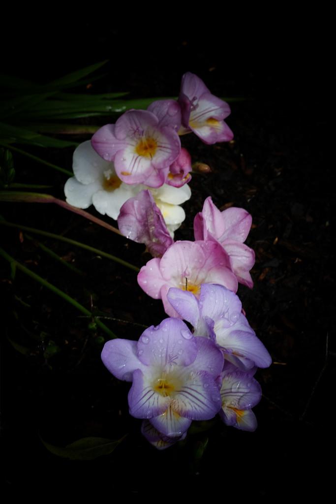 Spring flowers by maureenpp