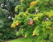 10th Sep 2020 - The first touch of Autumn