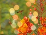 10th Sep 2020 - Bee and Bokeh