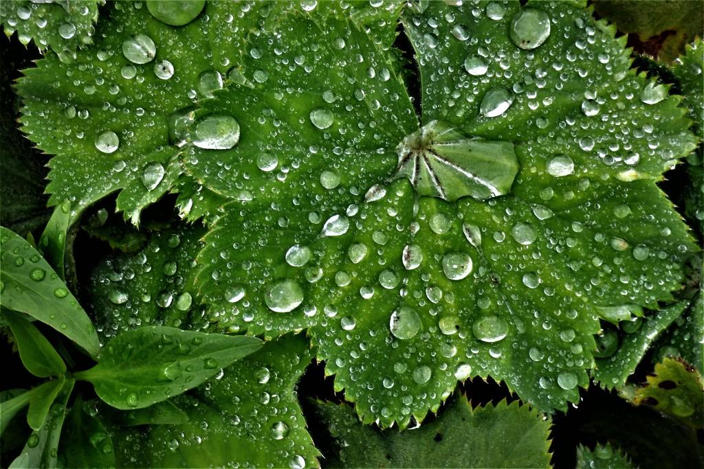 Rain drops ! by beryl