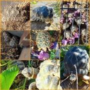 9th Sep 2020 - Tortoises