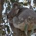 tree bed by koalagardens