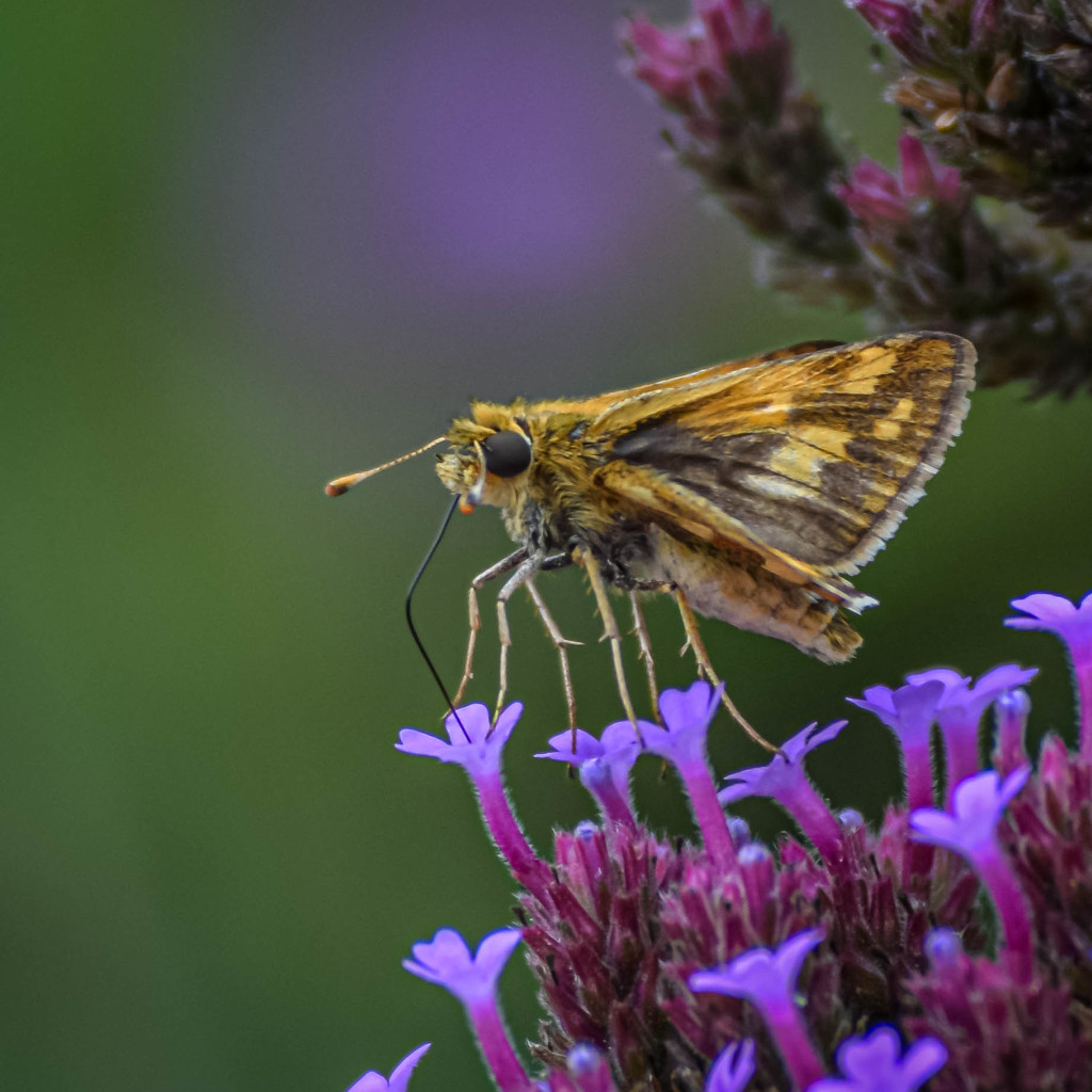 Moth in Manual by marylandgirl58