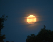 3rd Sep 2020 - September Corn Moon