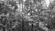 11th Sep 2020 - Woods...