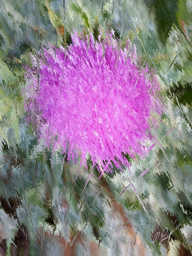 Pretty Pink Thistle  by flygirl