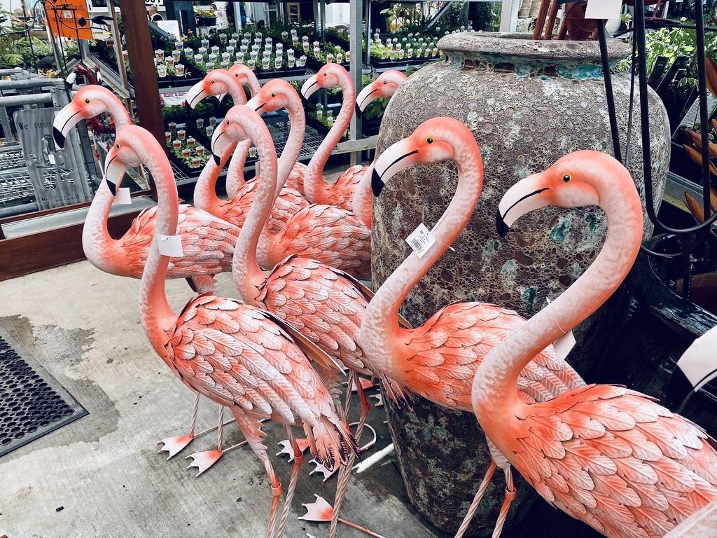 Flamingo Friday by yorkshirekiwi