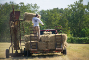 8th Sep 2020 - The last bale...