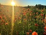 13th Sep 2020 - Sunbeam