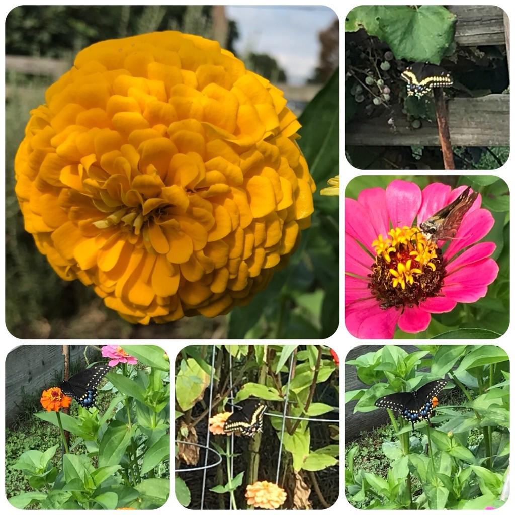 Butterflies in the Garden by allie912