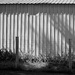 Black & White Trial Photo