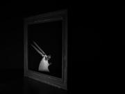 11th Sep 2020 - who framed Roger Rabbit (SOOC)