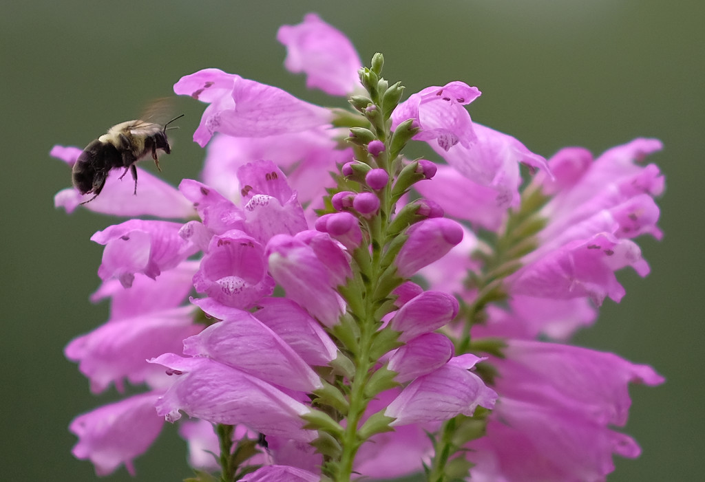 Obedient Plant and Friend  by tosee