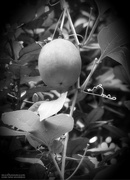 12th Sep 2020 - Passion Fruit...
