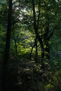 11th Sep 2020 - Deep woods, late in the day - nf-sooc-2020