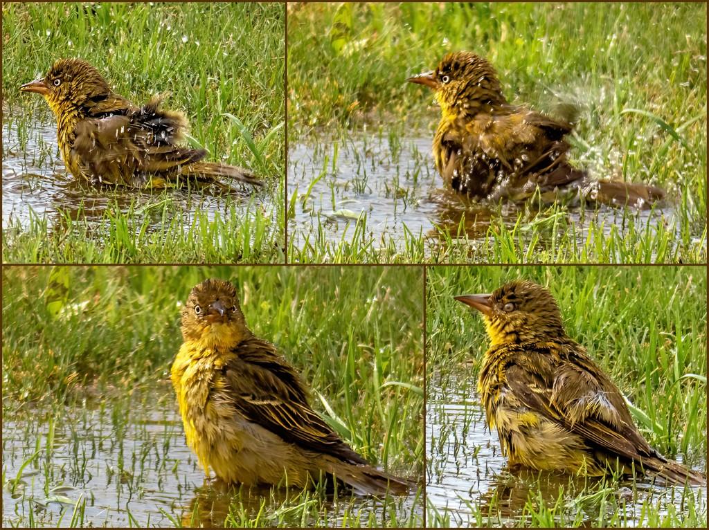 Splishing and splashing by ludwigsdiana