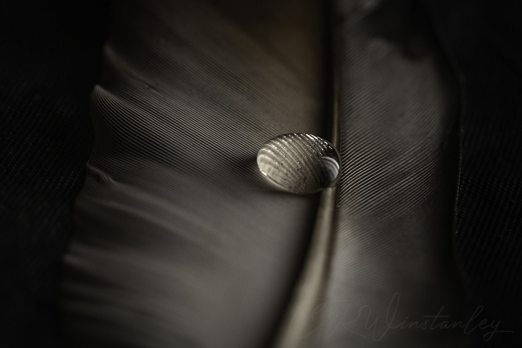 Droplet on a Feather by kipper1951