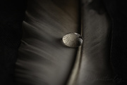 11th Sep 2020 - Droplet on a Feather