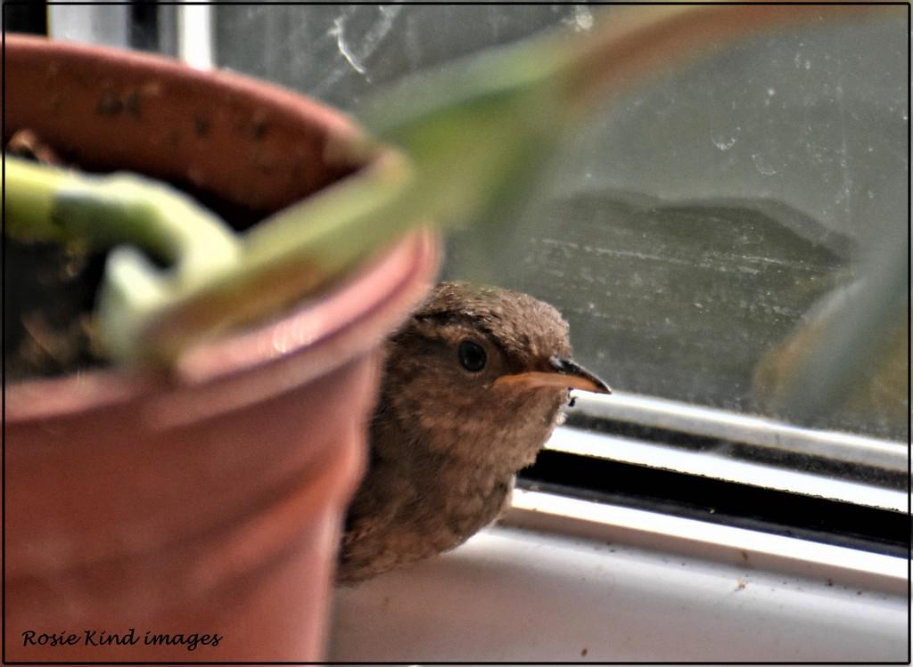 Little bird by rosiekind