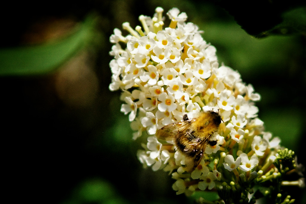 ... for all the bee_loved ones by romainz