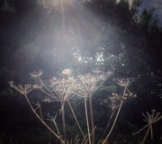 12th Sep 2020 - Reaching for the light