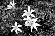 12th Sep 2020 - White flowers
