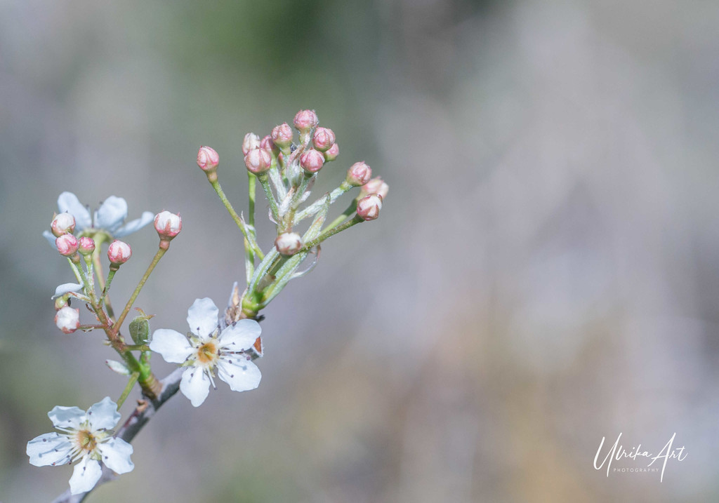 spring is here by ulla