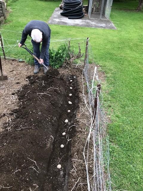 Spring gardening by dide
