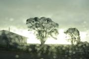 13th Sep 2020 - Rainy Sunday afternoon