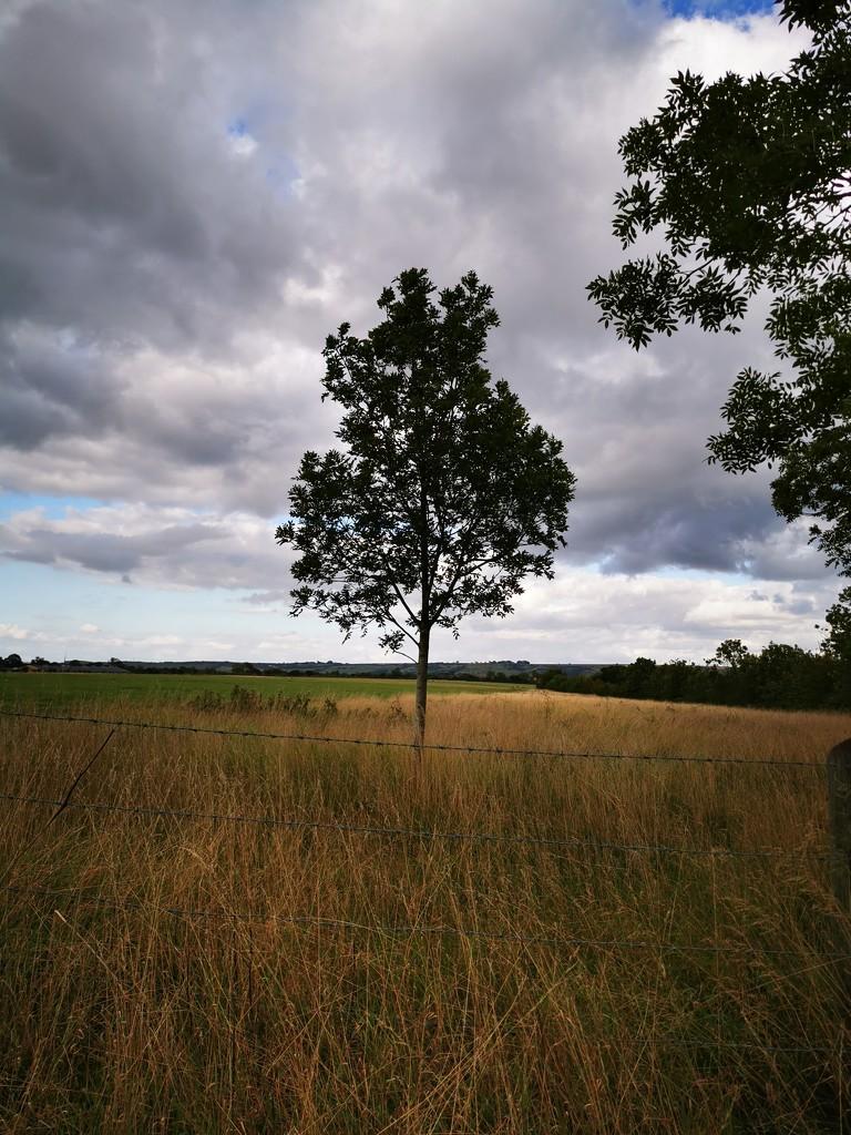Countryside  by plainjaneandnononsense