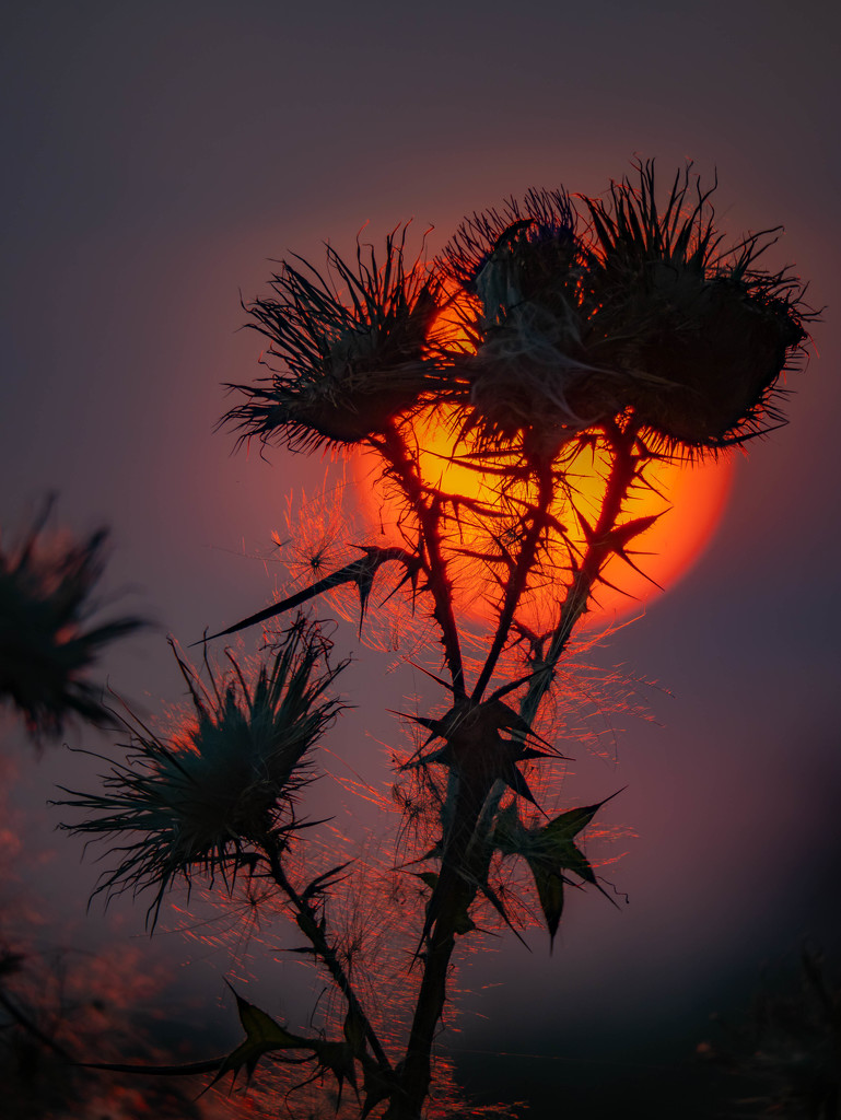 In the evening, by haskar